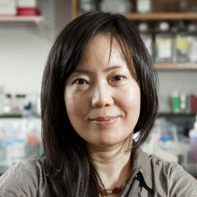 Photo of Dr. Wen Shen