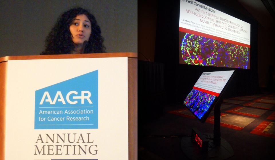 Loredana Puca presents research about prostate organoids